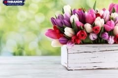 Thrakon_flower_bed-new
