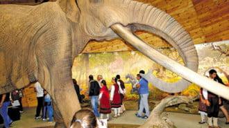 Участниците в SAW 2013 пътуват от плиоцена през античността до наши дни