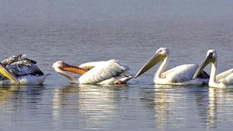 """Възстановяват гори и водни площи в резерватите """"Сребърна"""" и """"Бели Лом"""""""