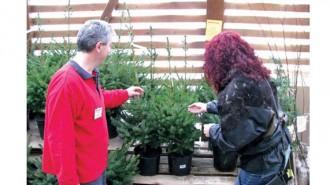 Все повече хора предпочитат коледно дърво в контейнер, което могат да засадят след празниците