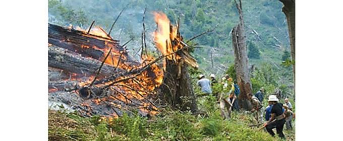"""През годините пожари унищожиха десетки декари иглолистна гора в землището на Природен парк """"Рилски манастир"""" на границата с Национален парк """"Рила"""