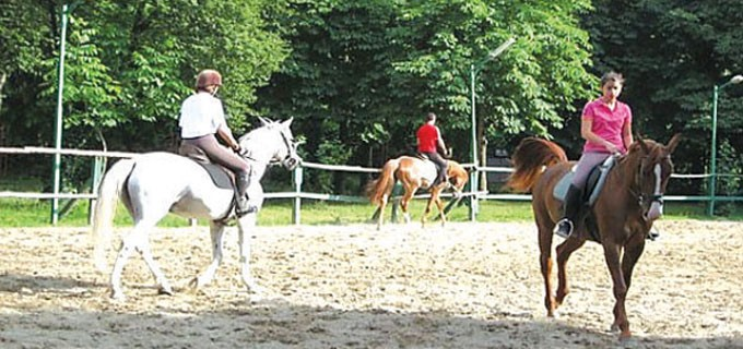 Идея за преместването на конната база има от години. Футболистът Димитър Бербатов също проявяваше интерес да я вземе за своята фондация и да направи там академия за млади таланти