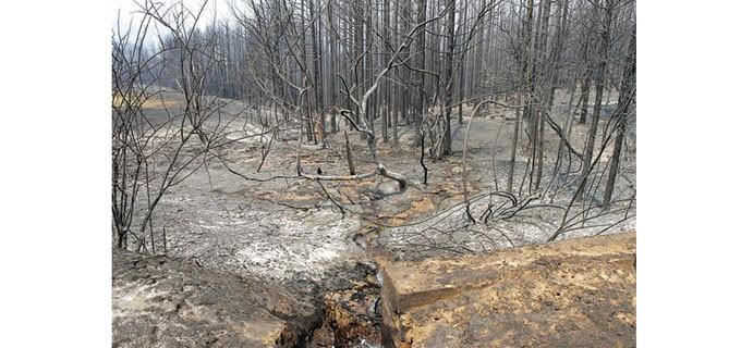 Пожарът в Кресненското дефиле миналата година унищожи близо 16 000 дка площи, от които 13 000 са горски насаждения