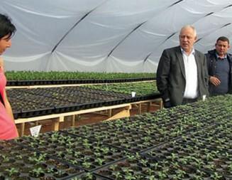Община Смолян изгради собствена оранжерия